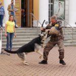 День фронтовой собаки